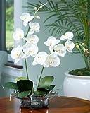 Phalaenopsis Silk Orchid - Cream/White