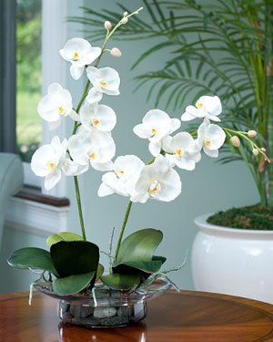 Phalaenopsis Silk Orchid - Cream/White by Petals Silkflowers