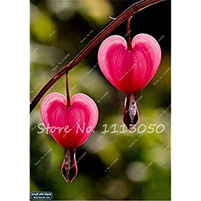 Kasuki 100Pcs Lily of The Valley Flower Bonsai, Bell Orchid Flower,Rich Aroma,Bonsai Flower Rhizome,Indoor Plant Look Like Love Heart - (Color: 2): Garden & Outdoor