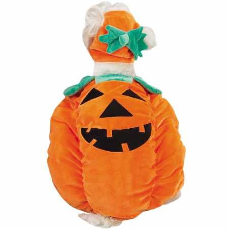 Zack & Zoey Pumpkin Pooch Dog Costume, X-Small, Orange
