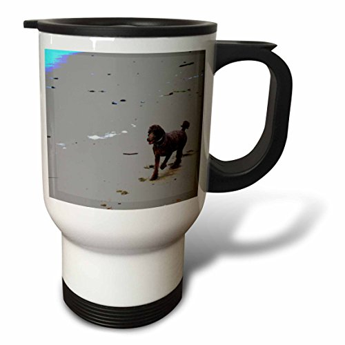 3dRose tm_29485_1 Chocolate Brown Poodle on The Beach Dogs Animal Photography Travel Mug, 14-Ounce, Stainless (Poodle Travel Mug)