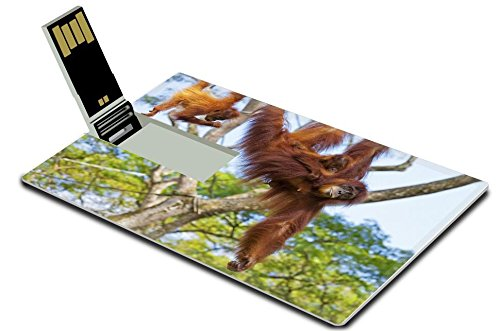 Orangutan Swings - 9