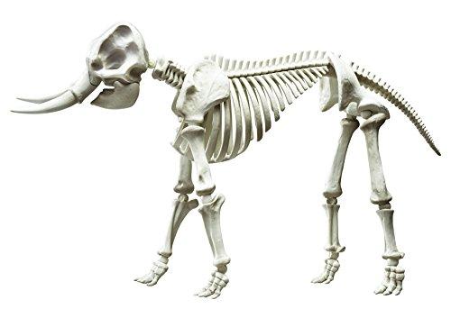 [Pose Skeleton Mammals Elephant] (Skeleton Costume Pose)