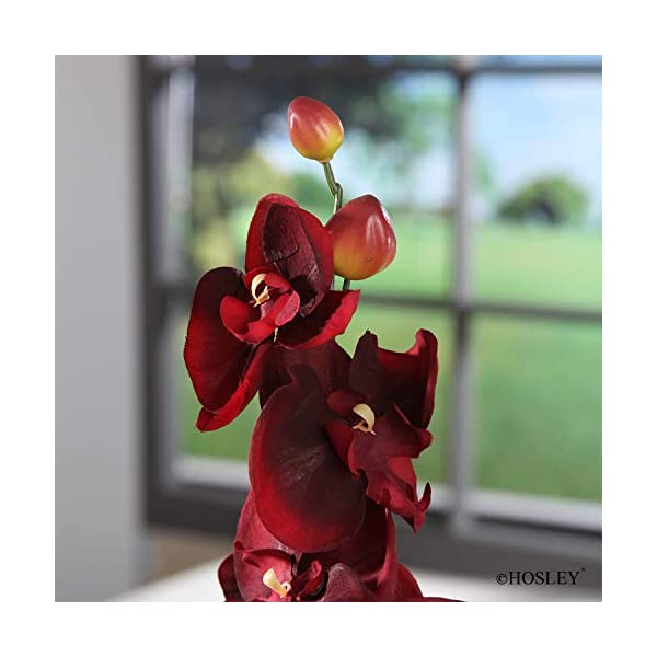Hosley Set of 6 Assorted 28″ Long, Orchid Phalaenopsis – Salmon & Burgandy. Great for Use Vases, for Home, Wedding, Spa & Special Occasions. O6