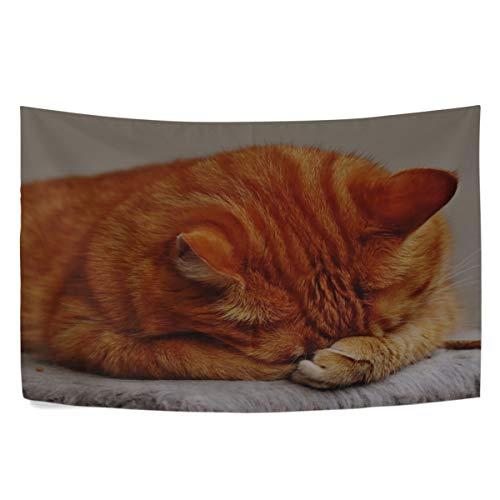 (RH Studio Tapestry Wall Hanging Cat Tabby Lying Dorm Livingroom Bedroom Bedspread Sofa Cove Living Kids Girls Boys Room Dorm Deco (60x40inch))