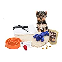 New Puppy Gifts | Kyjen Slo-bowl, Kong Classic Small Dog Toy, Zanies Gecko Toy, Organic Treats, Pee Pads, Bag Clip, Plush Mat, Recipe Card | 8 Items