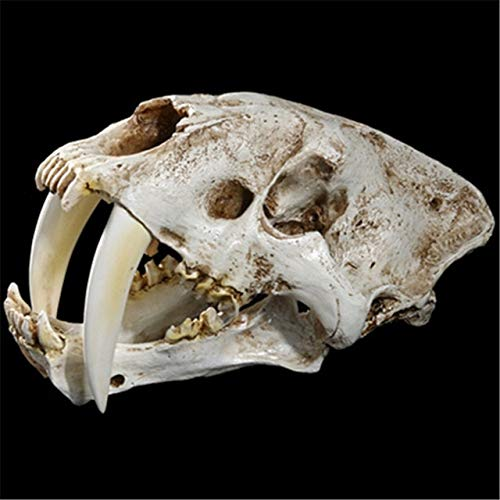 ZAMTAC A high-Precision Resin Model was Used to Decorate The Props in The Simulation Exhibition Sabertooth Animal Skull specimens - (Color: Creamy White)]()