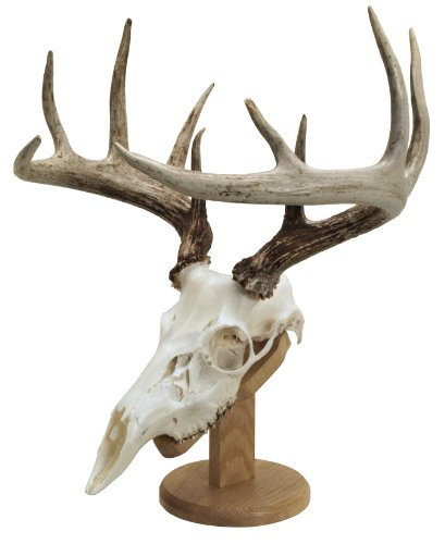 Walnut Hollow Country Solid Wood Skull Display & Mount Kit for Wall or Table Display in Oak