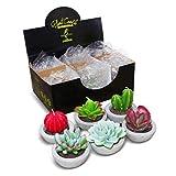 DarkSteve Decorative Plant Citronella Candle Collection - 6 pcs | Cactus Candles | Succulent Candles for Home Decor
