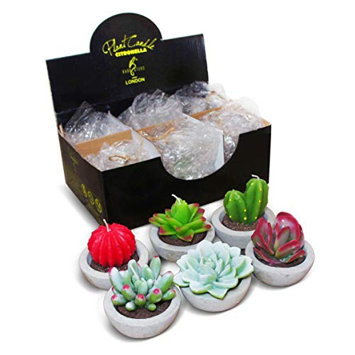 DarkSteve Decorative Plant Citronella Candle Collection - 6 pcs   Cactus Candles   Succulent Candles for Home Decor