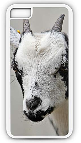 iPhone 8 Plus 8+ Case Goat Kid Domestic Goat Cute Dwarf Goat Customizable by TYD Designs in White Plastic Black Rubber Tough Case