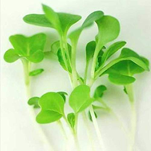 Deluxe Exotic Microgreens Seed Assortment | 12 Non GMO Varieties Including Chia Tatsoi, Pak Choi, Cress And More | Add Some Exotic Highlights To Your Cooking by Handy Pantry (Image #4)