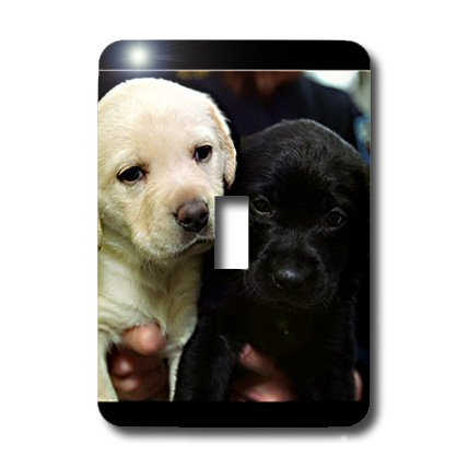 3dRose lsp_1219_1 Black and Yellow Lab Puppies Single Toggle Switch