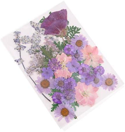 Sharplace ドライフラワー ドライ葉 押し花 結婚式の招待状 ホビー用素材 スクラップブック 装飾 全6選択 - A
