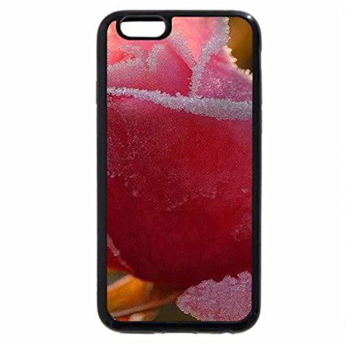 iPhone 6S / iPhone 6 Case (Black) Pink rose frosted.