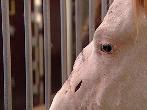 Campus Vets - Season 1, Episode 11 - Horse Nose Job