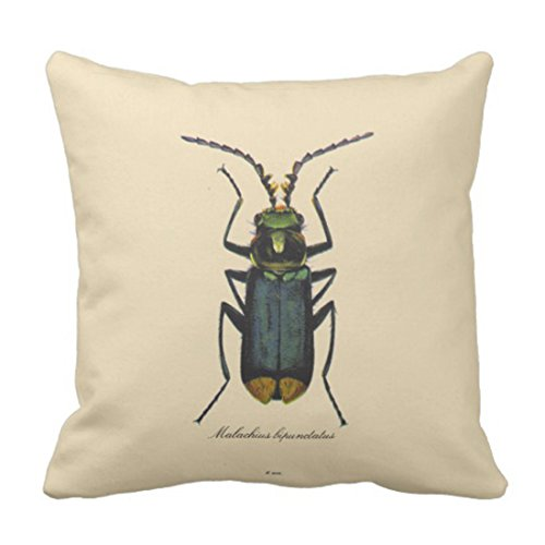 Emvency Throw Pillow Cover Taxonomy Vintage Insects Entomology Reversible Biology Decorative Pillow Case Home Decor Square 20 x 20 Inch - Pillow Beetle