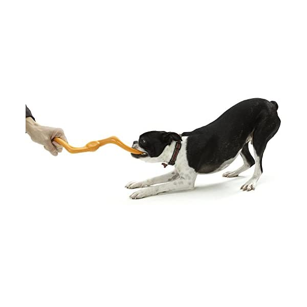 West Paw Zogoflex Bumi Interactive Tug of War Durable Dog Play Toy, 100% Guaranteed Tough, It Floats!, Made in USA… Click on image for further info. 3