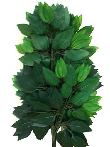 (12 Sprays Ficus Leaves 23