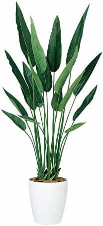 Amazon|フェイクグリーン 大型 ストレリチア レギネ (ストレチア ...