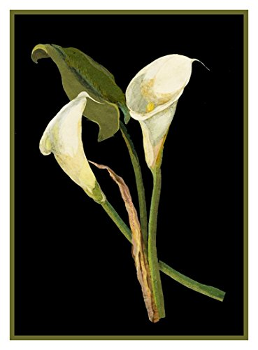 Stitch Chart Cross Flowers - Orenco Originals Calla Lily Flowers by Mary Delany Counted Cross Stitch Pattern