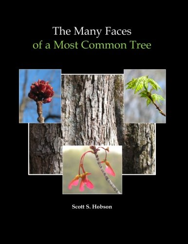 - The Many Faces of a Most Common Tree: Extraordinary Diversity in Native Red Maple
