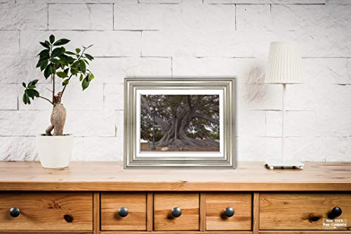 Santa Barbara, CA - Photo - Santa Barbara's Moreton Bay Fig Tree located in Santa Barbara, California, is believed to be the largest Ficus macrophylla in the country - Carol Highsmith |Size: 9x12|Read (Moreton Bay Fig Tree In Santa Barbara)