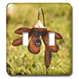 3dRose Jos Fauxtographee- Solar Light - A copper looking solar light on the lawn - Light Switch Covers - double toggle switch (lsp_288622_2)