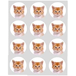 12 Kitten Ginger cat rice paper fairy / cup cake 40mm toppers pre cut decoration