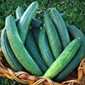David's Garden Seeds Cucumber Slicing Armenian Dark Green D124CUC (Green) 50 Heirloom Seeds