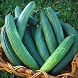 buy David's Garden Seeds Cucumber Slicing Armenian Dark Green D124CUC (Green) 50 Heirloom Seeds now, new 2018-2017 bestseller, review and Photo, best price $8.49