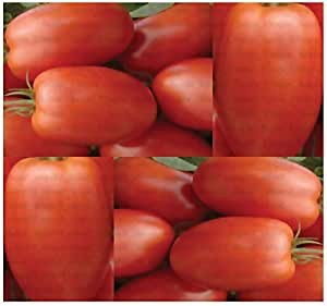 150) ROMA Tomato seeds - HEIRLOOM - THE KETCHUP TOMATO - Combined S&H