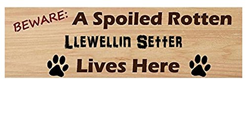 Llewellin Setter Lives Here Beware of Dog Lover Sticker Sign for Walls Windows Bumper Sticker Dog Sign Dog Lover Decor Llewellin Setters