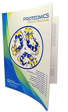 Bovine Serum Albumin (BSA) Standard [2 mg/ml] – 6 x 5 ml ...