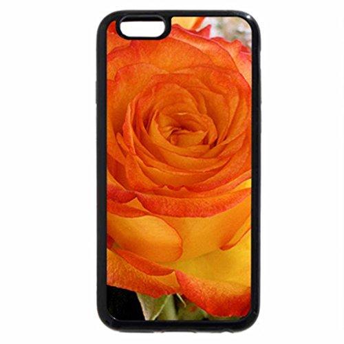 iPhone 6S / iPhone 6 Case (Black) Orange rose