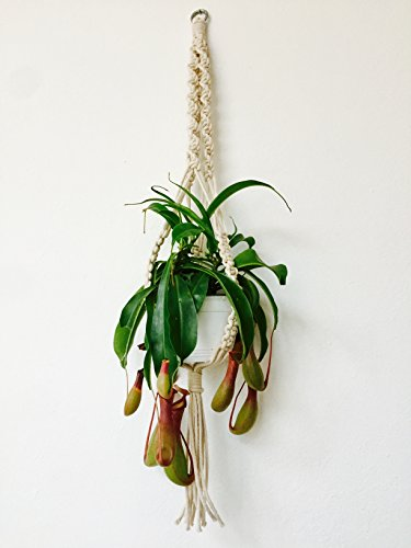 Macrame Plant Hanger by ALL THINGS GRAVES