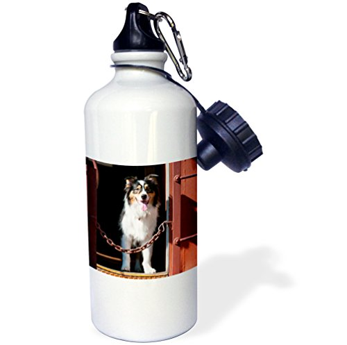 danita-delimont-dogs-australian-shepherd-in-a-train-car-21-oz-sports-water-bottle-wb-230324-1