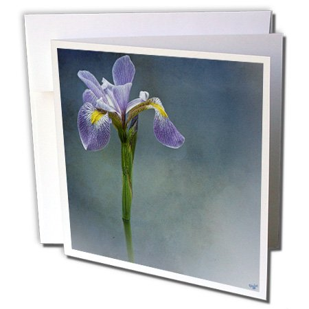 Mist Iris (3dRose Chris Lord Botanica - Iris Mist Blue Floral Flower - 1 Greeting Card with envelope (gc_55962_5))
