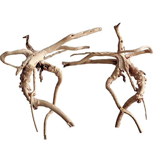 IFTWOOD Small Medium Aquarium Bogwood Decoration Live Plant ()