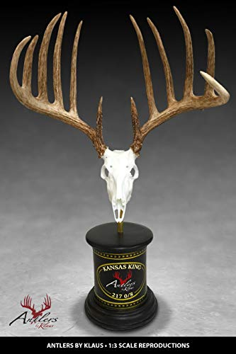 (Antlers by Klaus Whitetail 1:3 Scale Reproduction (Sculpture) - The Kansas King)