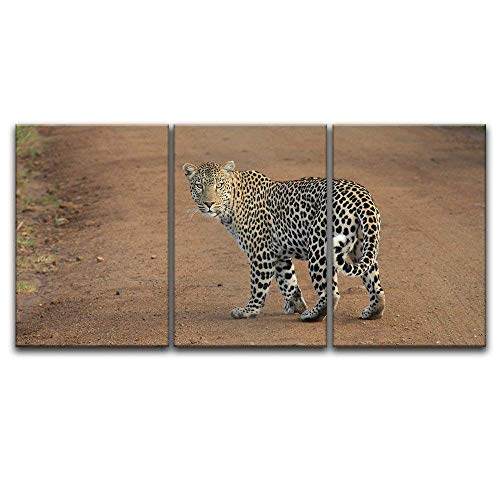 3 Panel A Leopard Walking in The Wild x 3 Panels