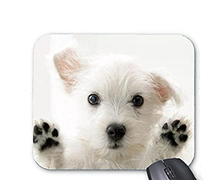 Amazon Com Cute Small White Dog Mouse Pad Office Products