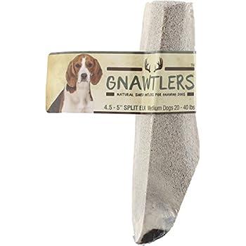 Amazon.com : Prairie Dog Pet Products Elk Antler, Medium
