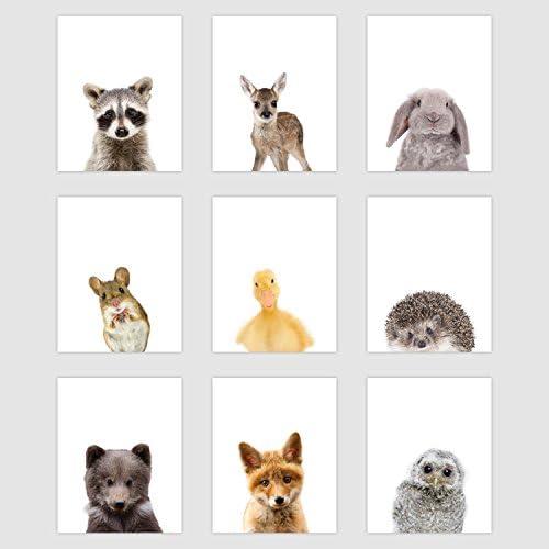 Palace Learning Woodland Animal Poster product image