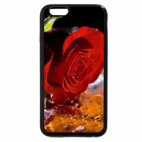 iPhone 6S / iPhone 6 Case (Black) red rose on a rain
