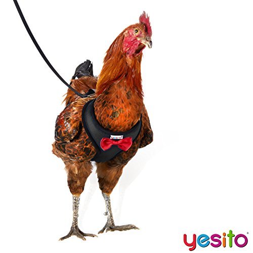 Yesito Chicken Harness Hen Size With 6ft Matching Leash – Adjustable, Resilient, Comfortable, Breathable, Small, Suitable for Chicken Weighing about 2.2 Pound,Black by Yesito