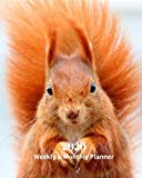 2020 Weekly and Monthly Planner: Red Squirrel - Monthly Calendar with U.S./UK/ Canadian/Christian/Jewish/Muslim Holidays- Calendar in Review/Notes 8 x 10 in.-Wildlife Animals Nature