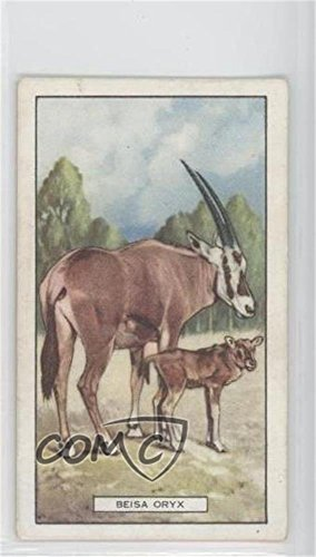 The Beisa Oryx (Trading Card) 1937 Gallaher Wild Animals - Tobacco [Base] #34 from Gallaher Wild Animals