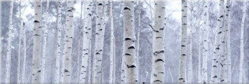 View Artwork - Startonight Canvas Wall Art Birch Trees Forest, Trees USA Design for Home Decor, Dual View Surprise Artwork Modern Framed Ready to Hang Wall Art 15.75 X 47.2 Original Art Painting