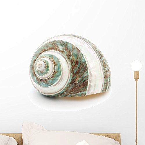 - Wallmonkeys Sea Shell Wall Decal Peel and Stick Graphic (18 in W x 15 in H) WM229656
